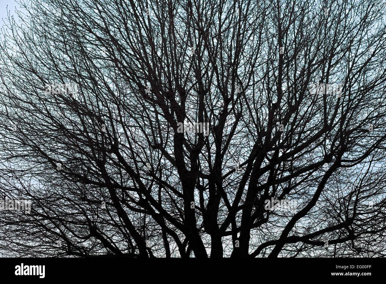 Hiver arbre nu contre le ciel bleu en soirée. Photo Stock