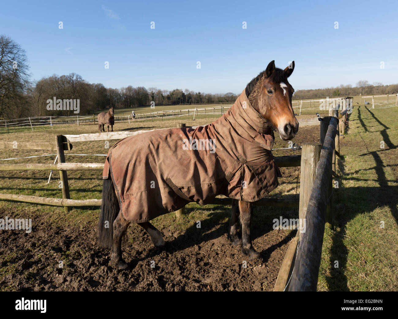 Cheval en paddock avec couverture d'hiver, St Briavels, Gloucestershire, England, UK Photo Stock