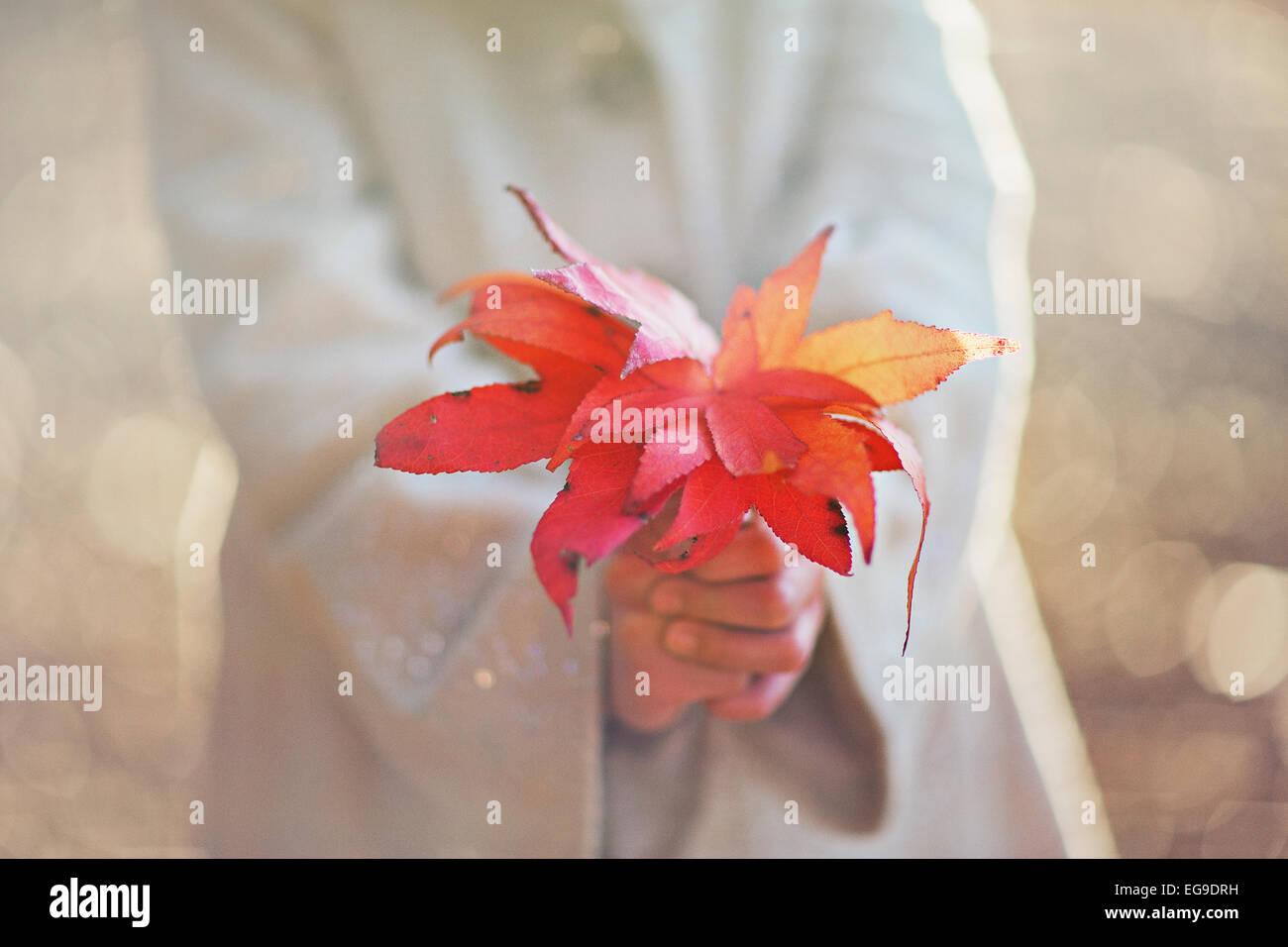 Girl holding fall leaves Photo Stock