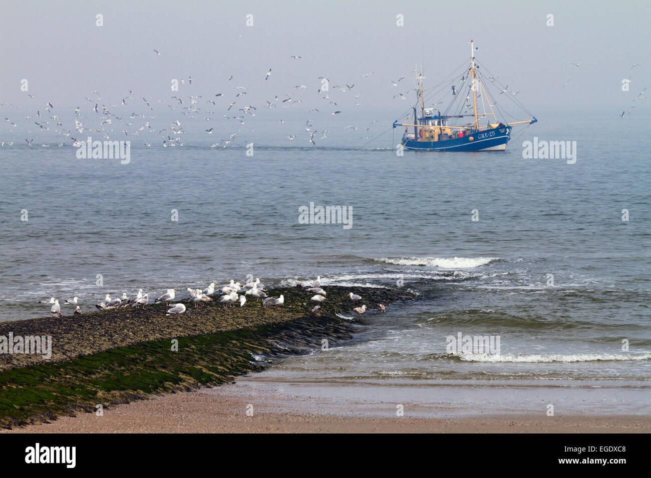 Bateau de pêche avec des goélands de l'île de Norderney off, Nationalpark, Mer du Nord, îles Photo Stock
