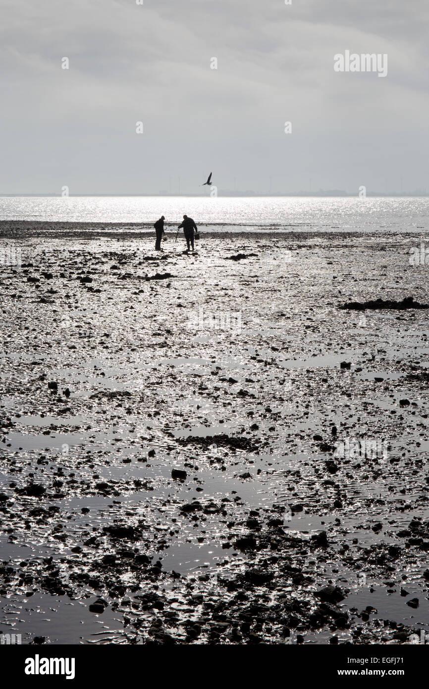 Les ramasseurs d'huîtres sur la plage à l'île de Mersea, Essex, Angleterre Photo Stock