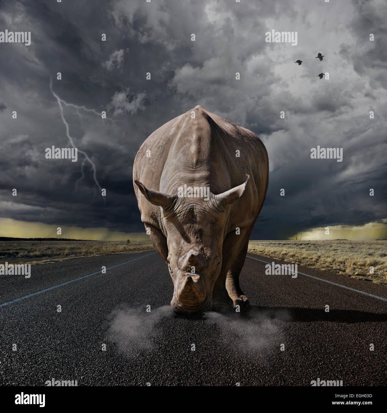 Grand rhino prêt à charger Photo Stock