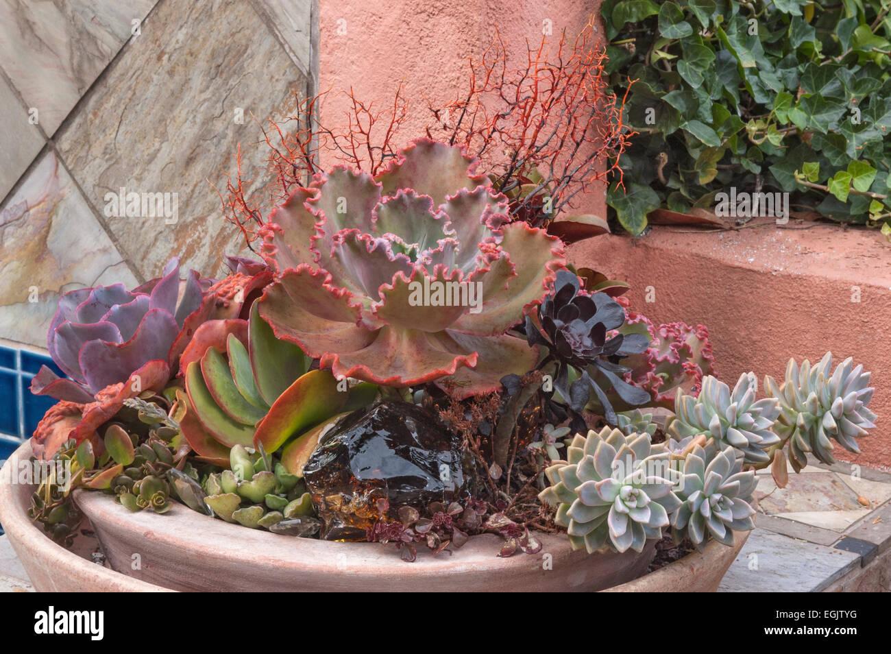 Mur Vegetal Plante Grasse plantes grasses photos & plantes grasses images - alamy