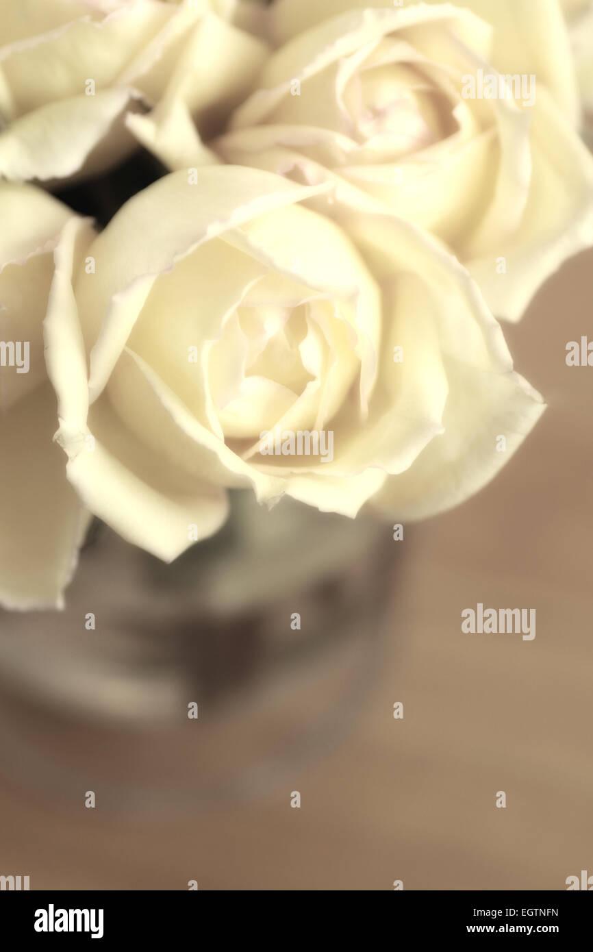 Roses dans un vase converti en sépia Photo Stock