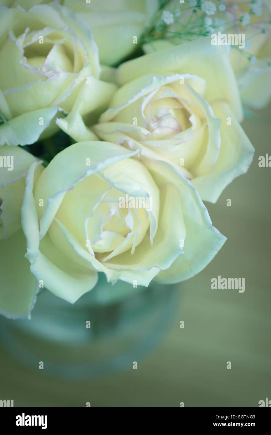 Roses dans un vase avec ton bleu Photo Stock