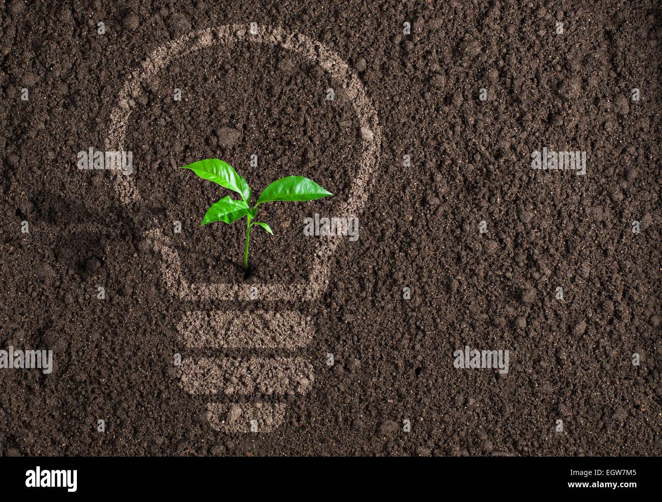 Plante verte ampoule en silhouette sur fond de sol Photo Stock