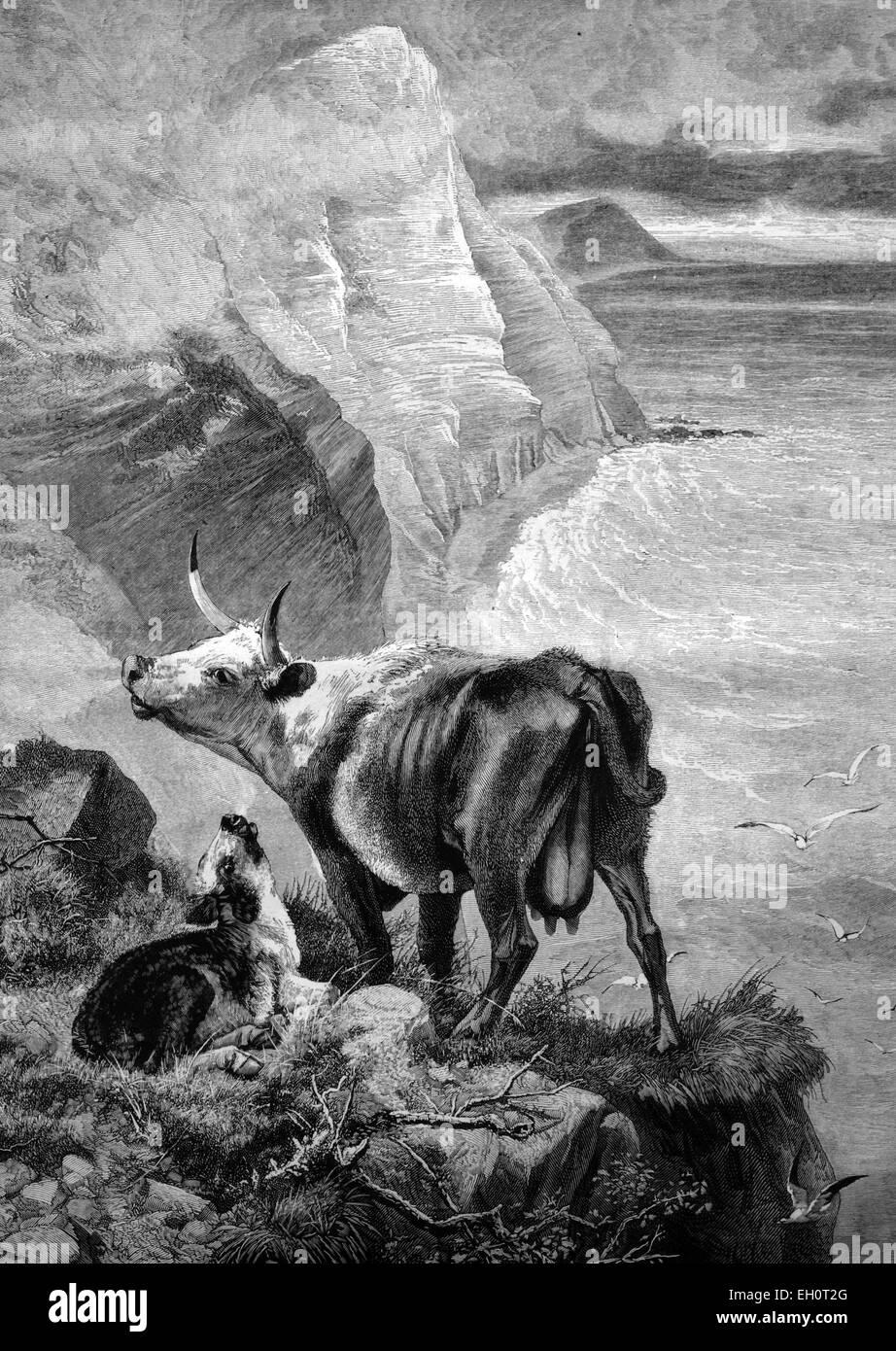 Vache et veau dans les montagnes, illustration historique, 1884 Photo Stock