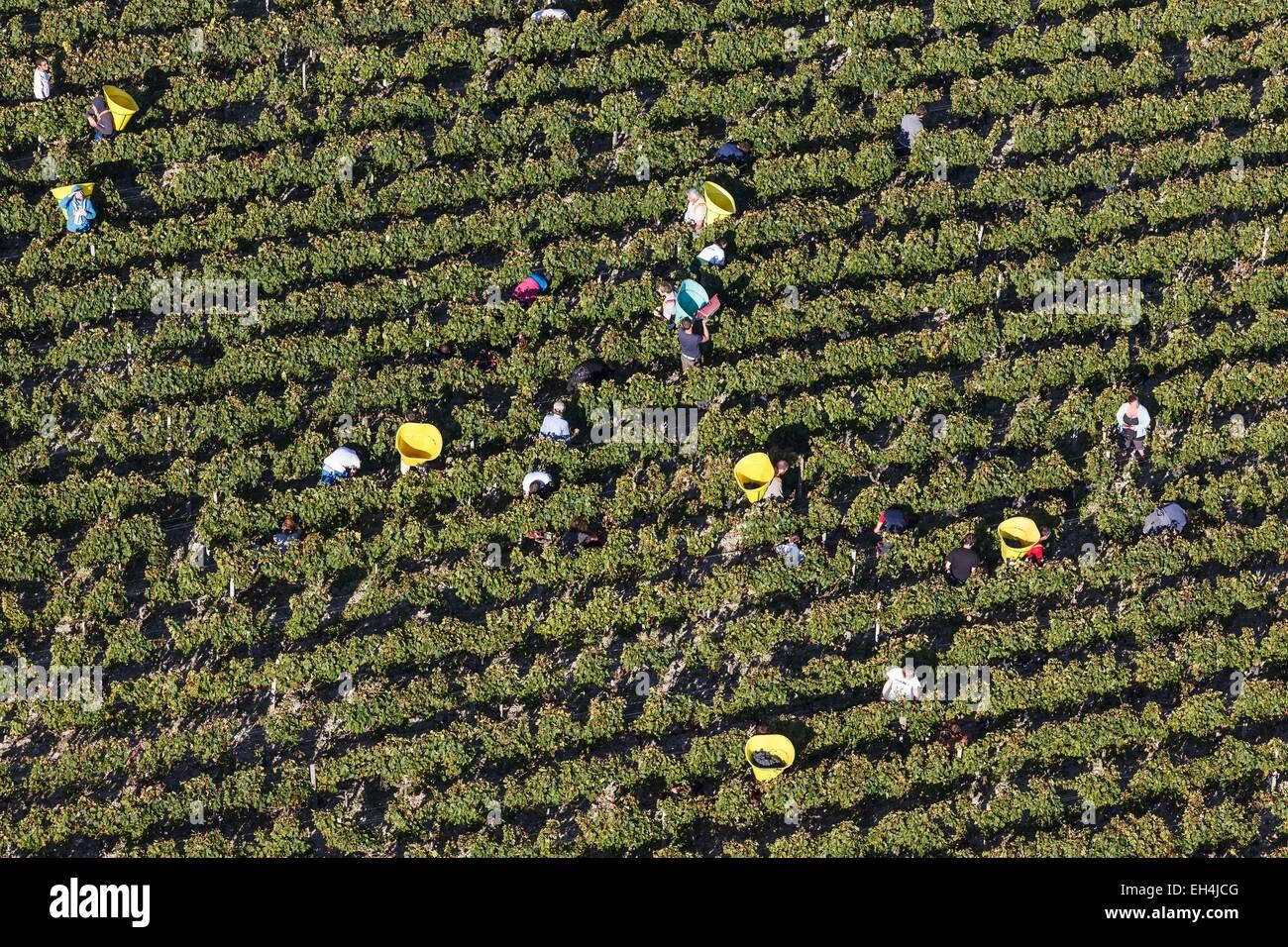 France, Gironde, Cantenac, vendangeurs à Margaux vignobles (vue aérienne) Photo Stock