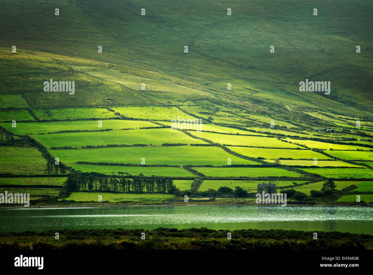 Champs verts sur l'anneau de Kerry, vu de l'île de Valentia, Irlande Photo Stock