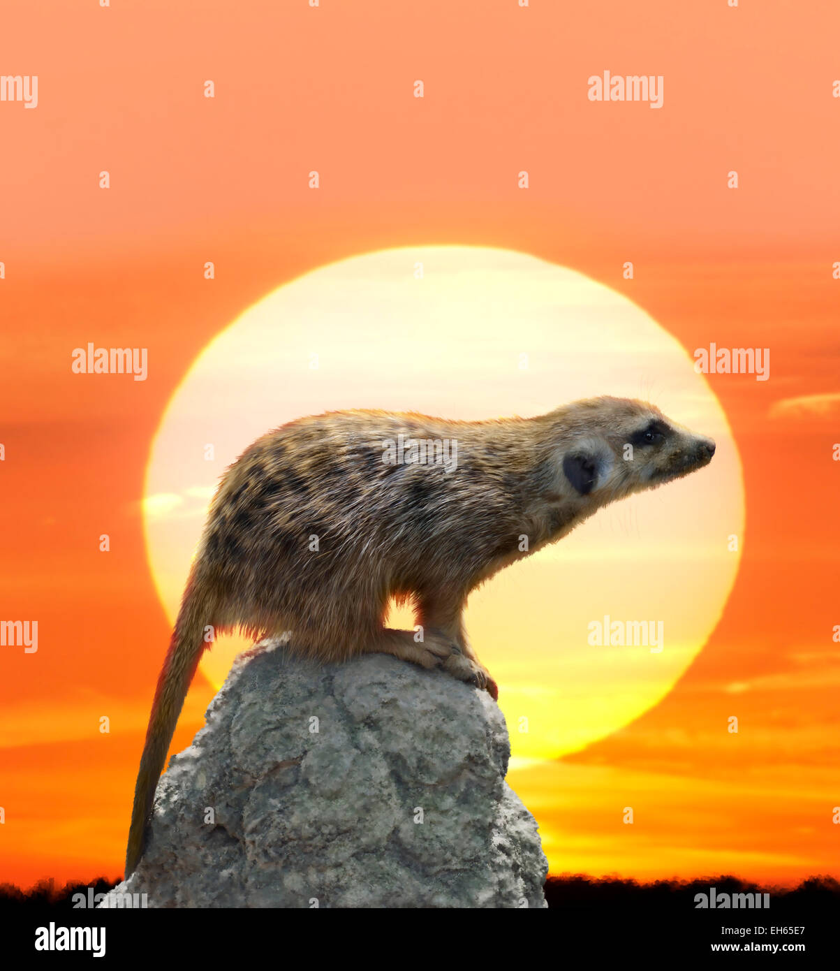 Peinture numérique de Meerkat contre Coucher du Soleil Photo Stock