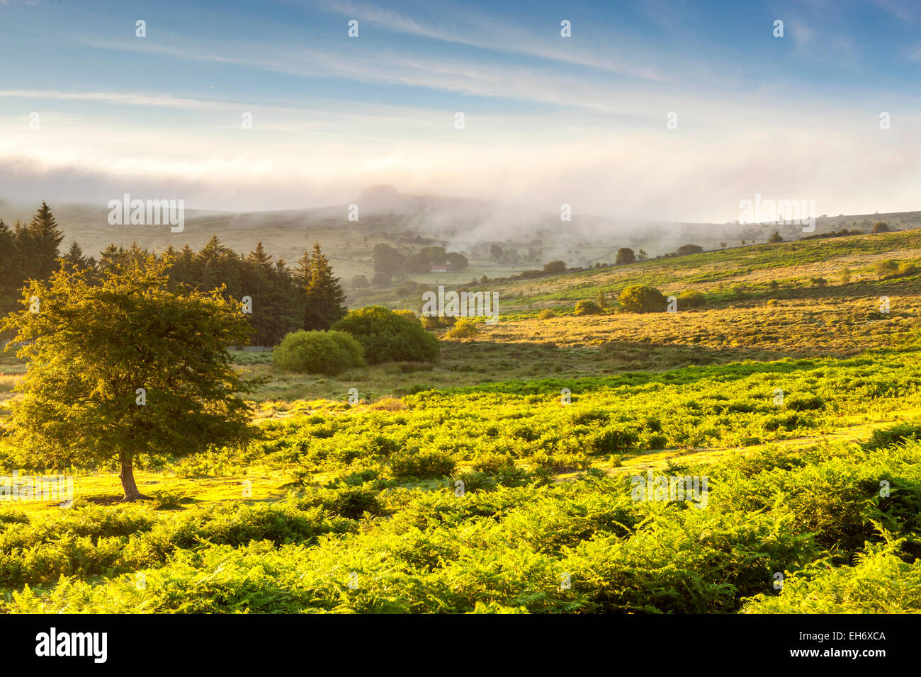 Le parc national du Dartmoor, Holwell, Devon, Angleterre, Royaume-Uni, Europe Photo Stock