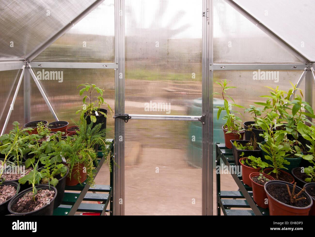 Vue de l\'intérieur d\'une serre de jardin en polycarbonate avec la ...