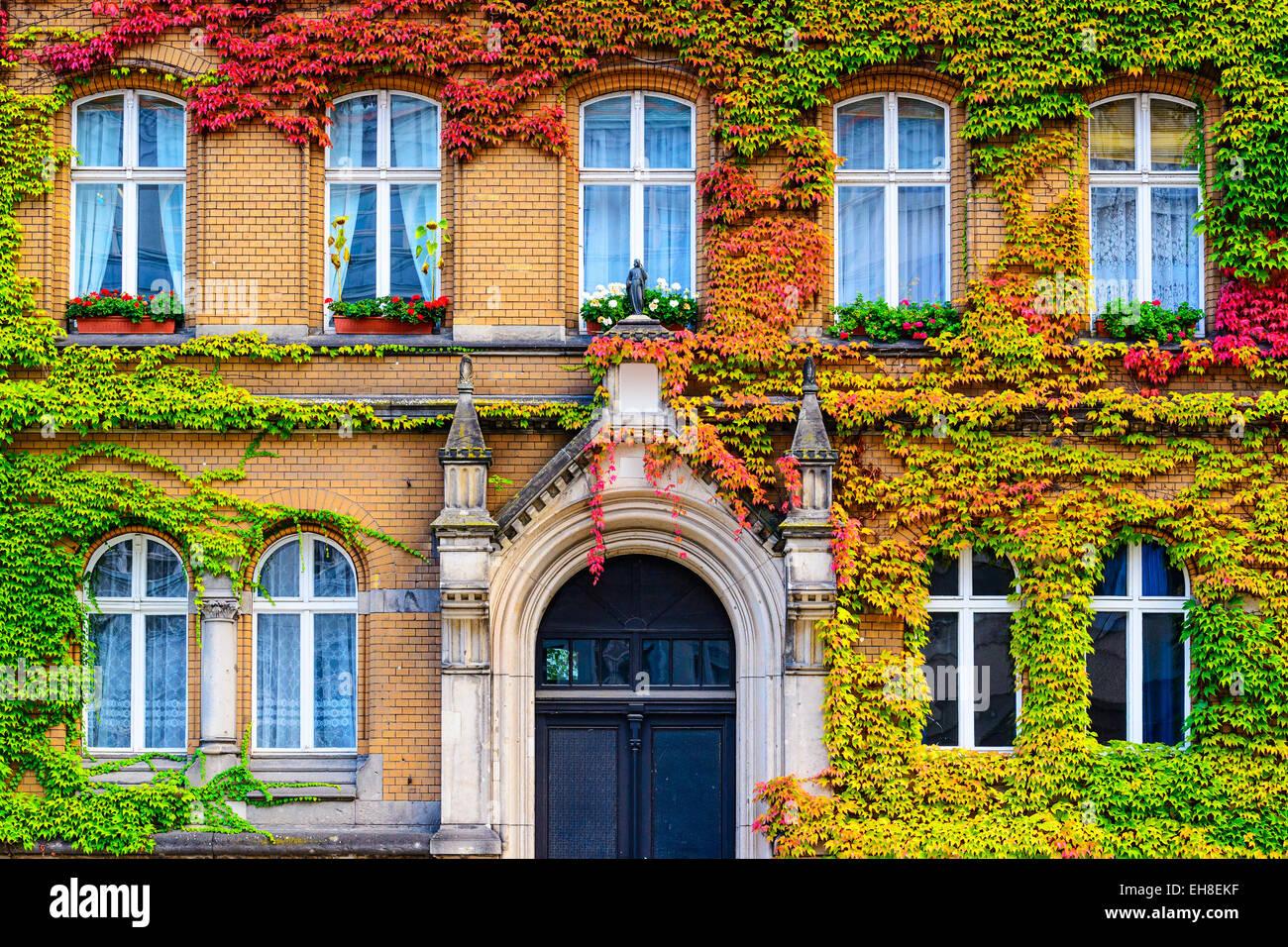 Façade recouverte de vigne à Berlin, Allemagne. Photo Stock