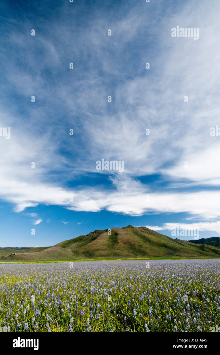 Camas prairie à Camas prairie centennial Marsh Wildlife Management Area, Idaho Photo Stock