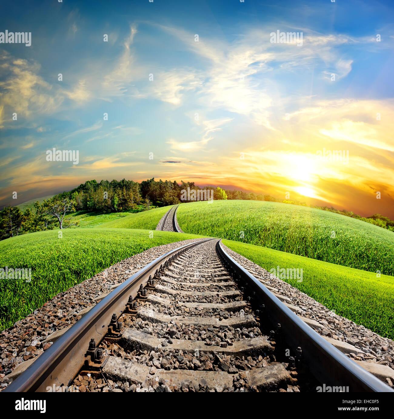 Chemin de fer à travers le champ et forêt verte Photo Stock