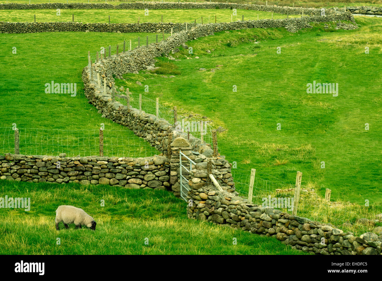 Clôture en pierre dans le Parc National de Connamara, Irlande Banque D'Images