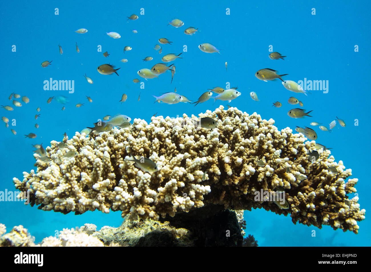 Coral reef Photo Stock