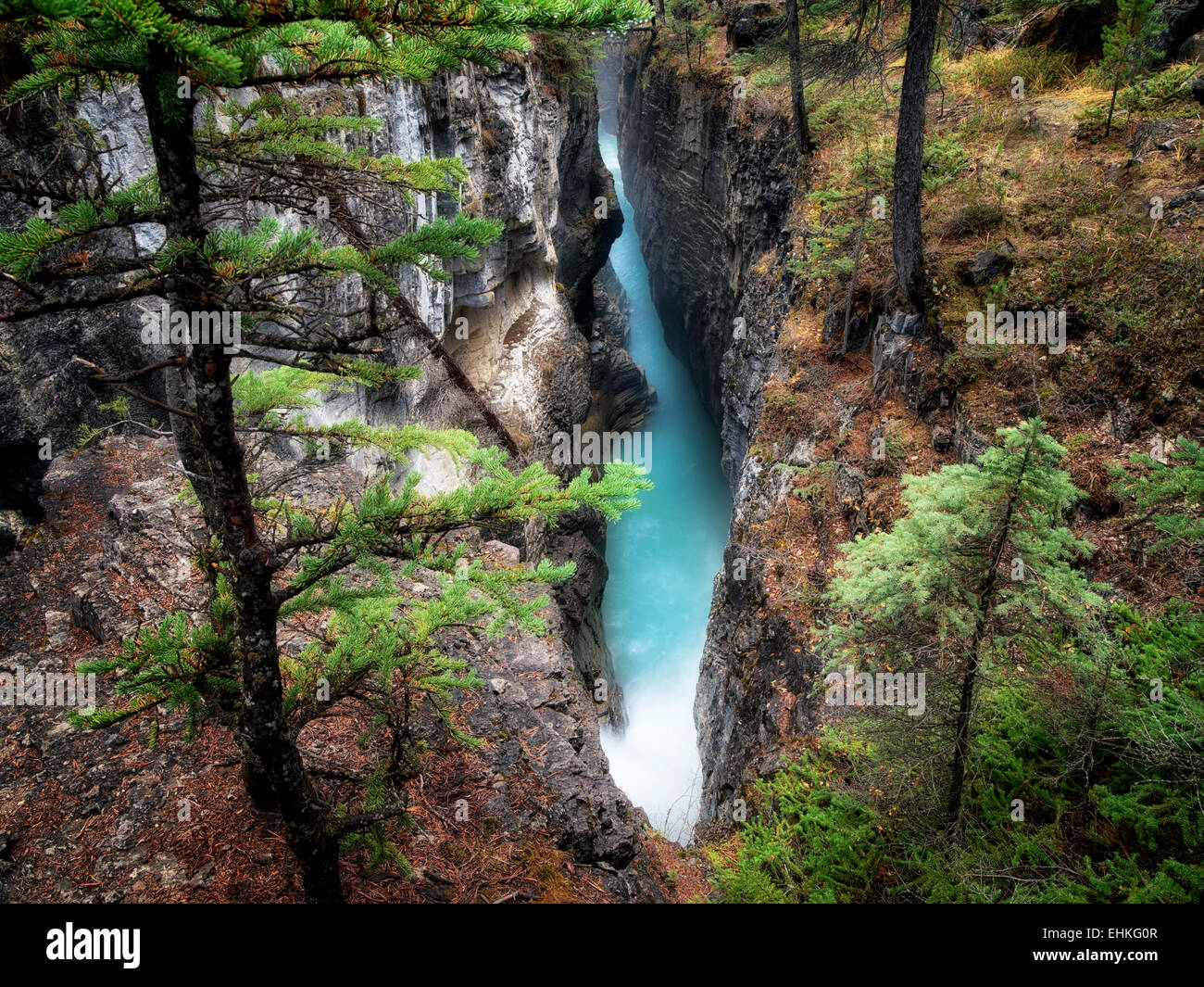 Dans le canyon du ruisseau de beauté. Le Parc National Jasper, Alberta, Canada Photo Stock