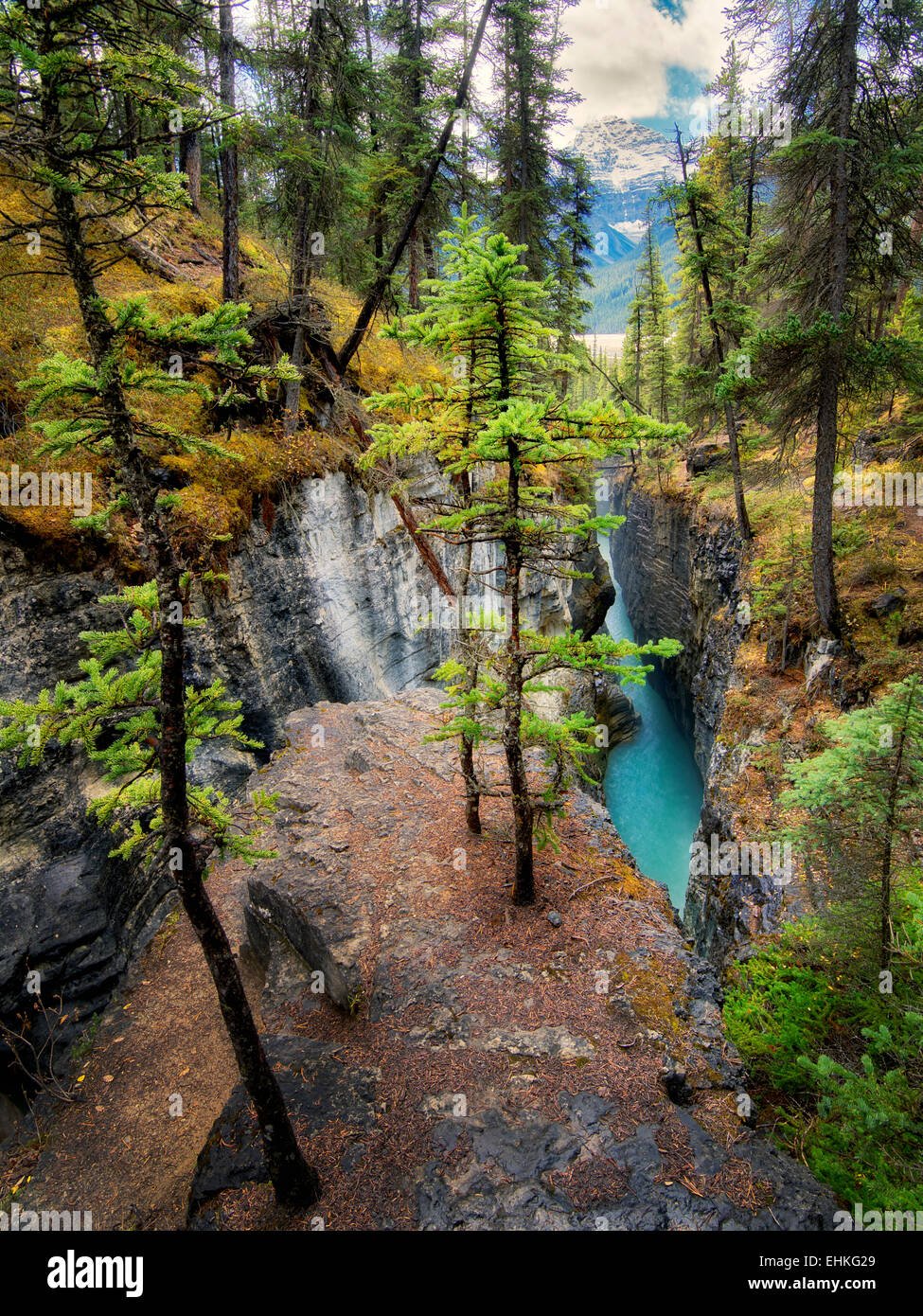 Dans le canyon du ruisseau de beauté. Le Parc National Jasper, Alberta, Canada Photo Stock
