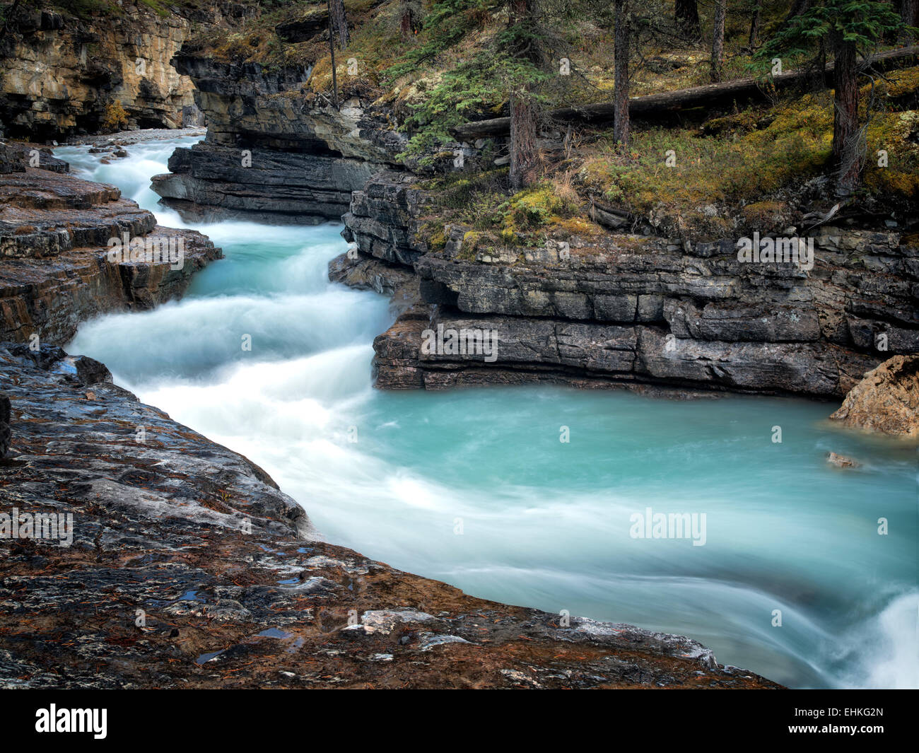 Stream In Beauty Creek. Le Parc National Jasper, Alberta Canada Photo Stock