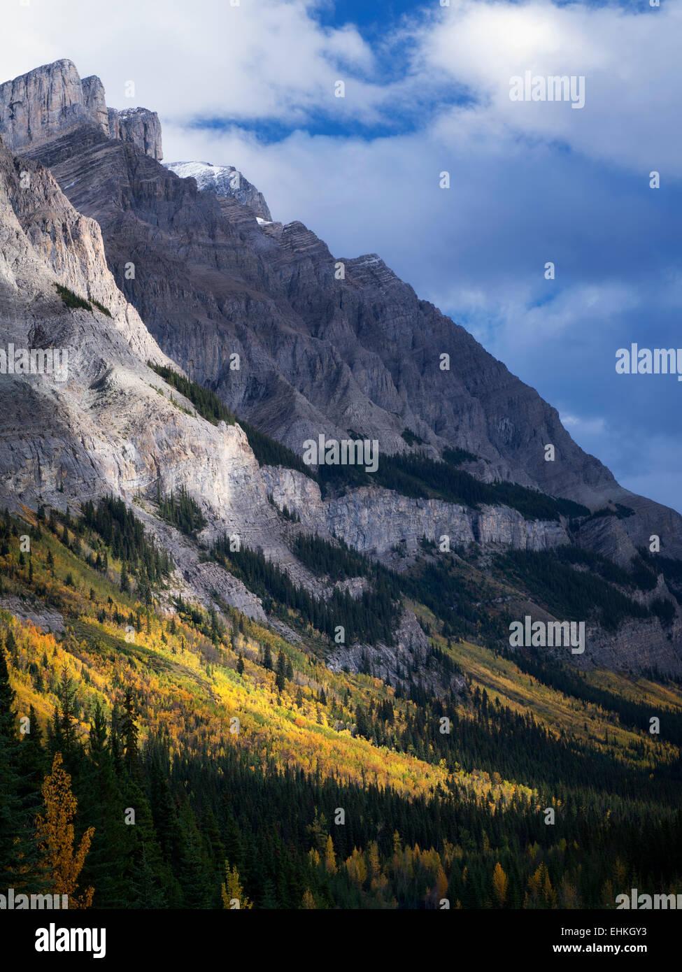 Le Mountainside avec automne peupliers de couleur. Le parc national Banff, Alberta, Canada Photo Stock