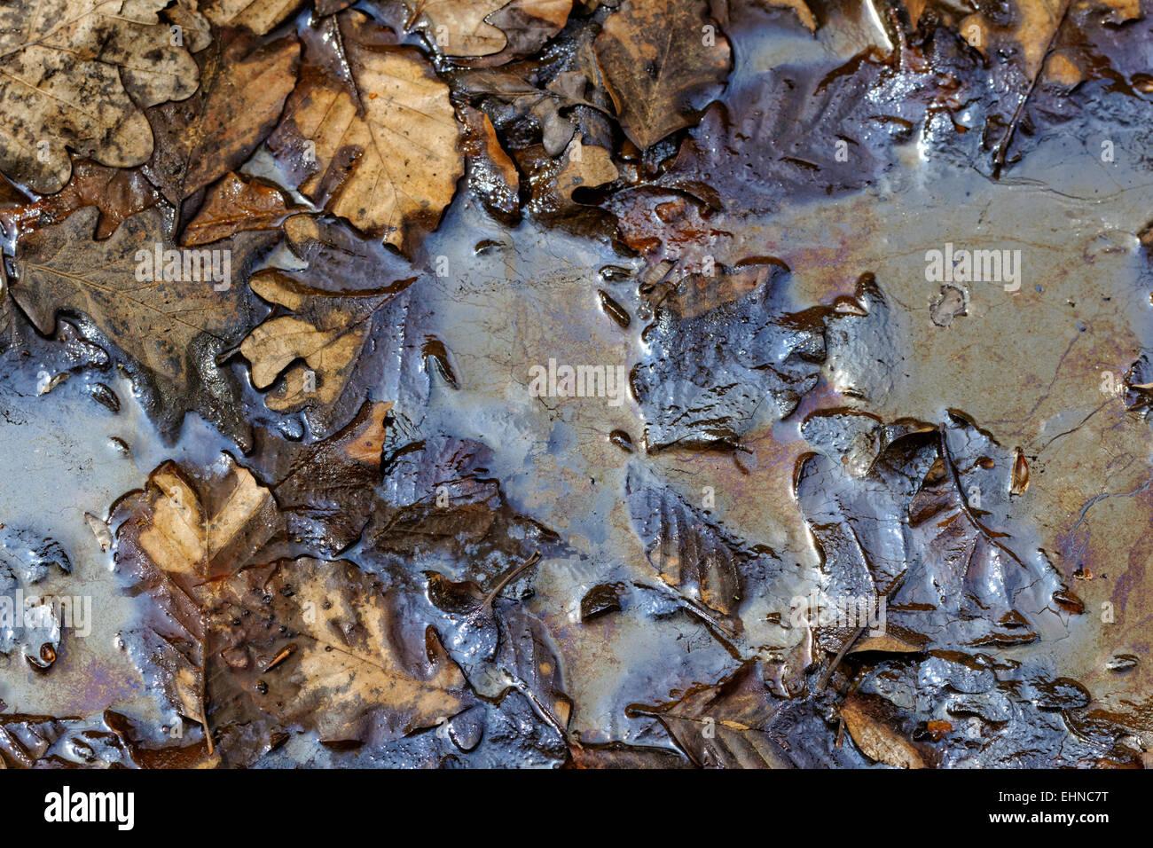 La pollution aux hydrocarbures sur les terres forestières Photo Stock