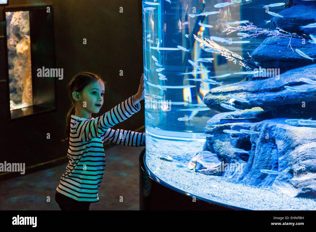 7 ans à regarder les poissons dans un aquarium. Photo Stock