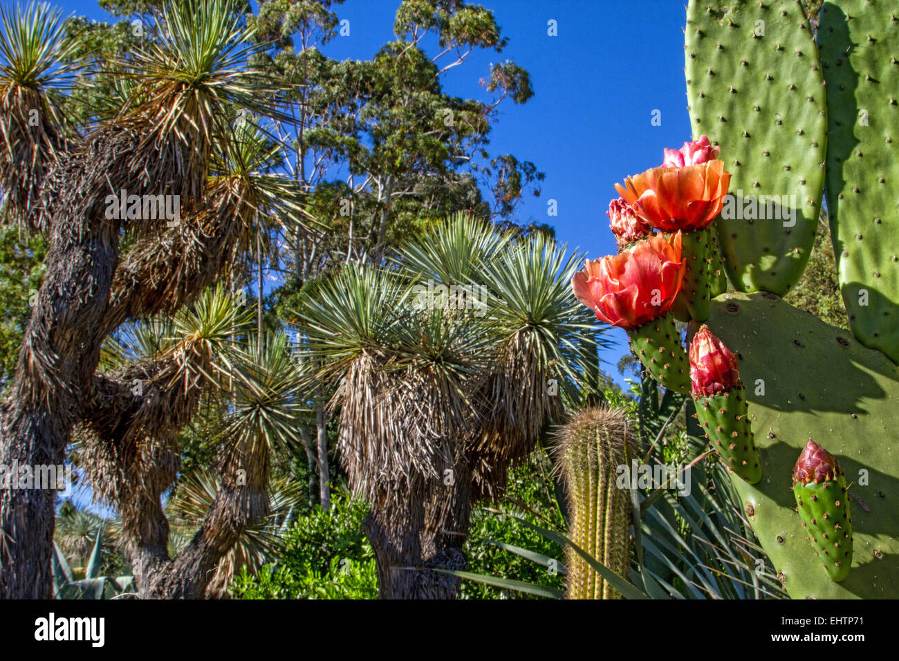 Jardin Zoologique Tropical La Londe Les Maures Var 83 Region