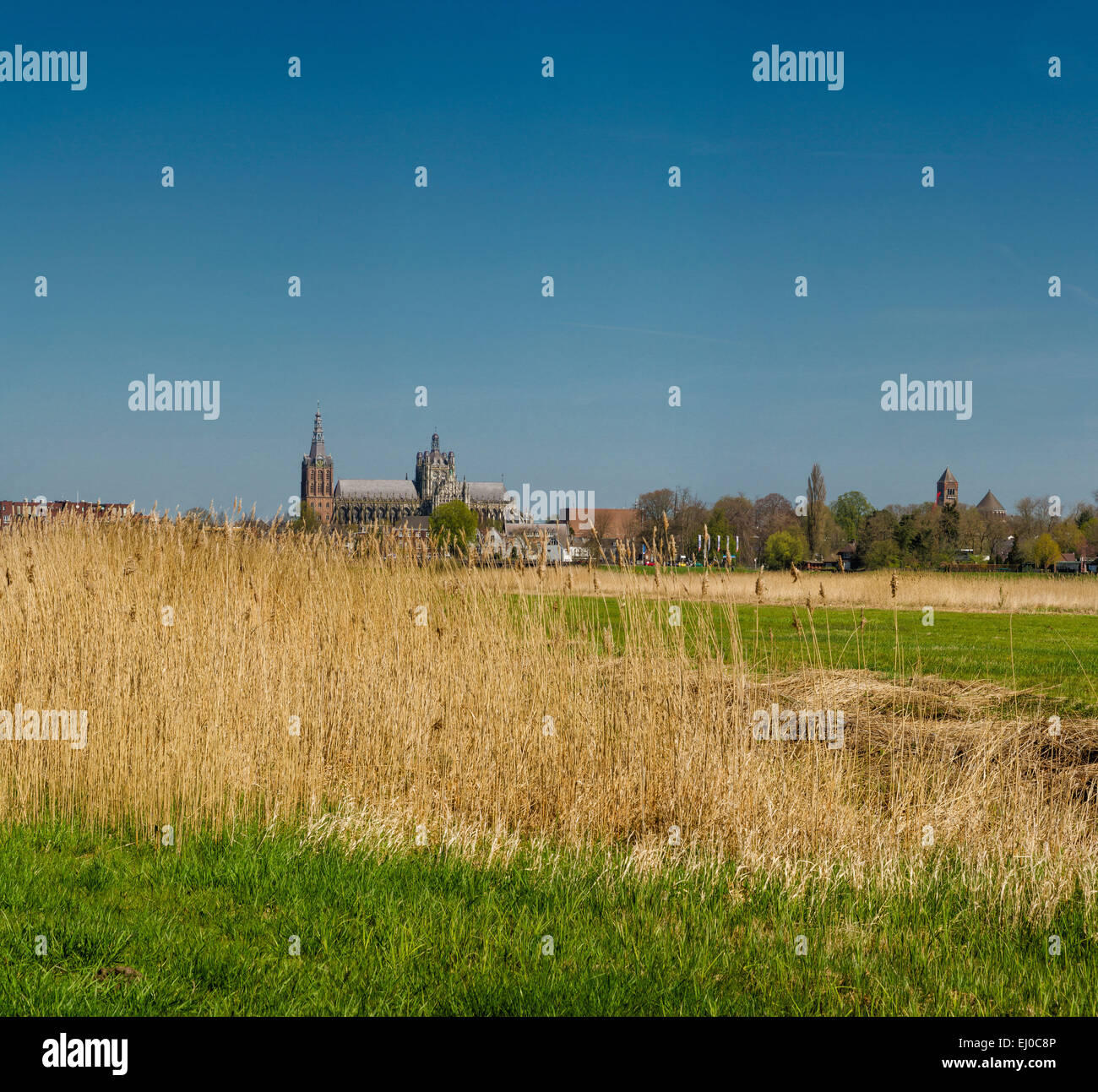 S-Hertogenbosch, Den Bosch, Pays-Bas, Hollande, Europe, paysage, champ, pré, printemps, Cathédrale, l'Église, Photo Stock