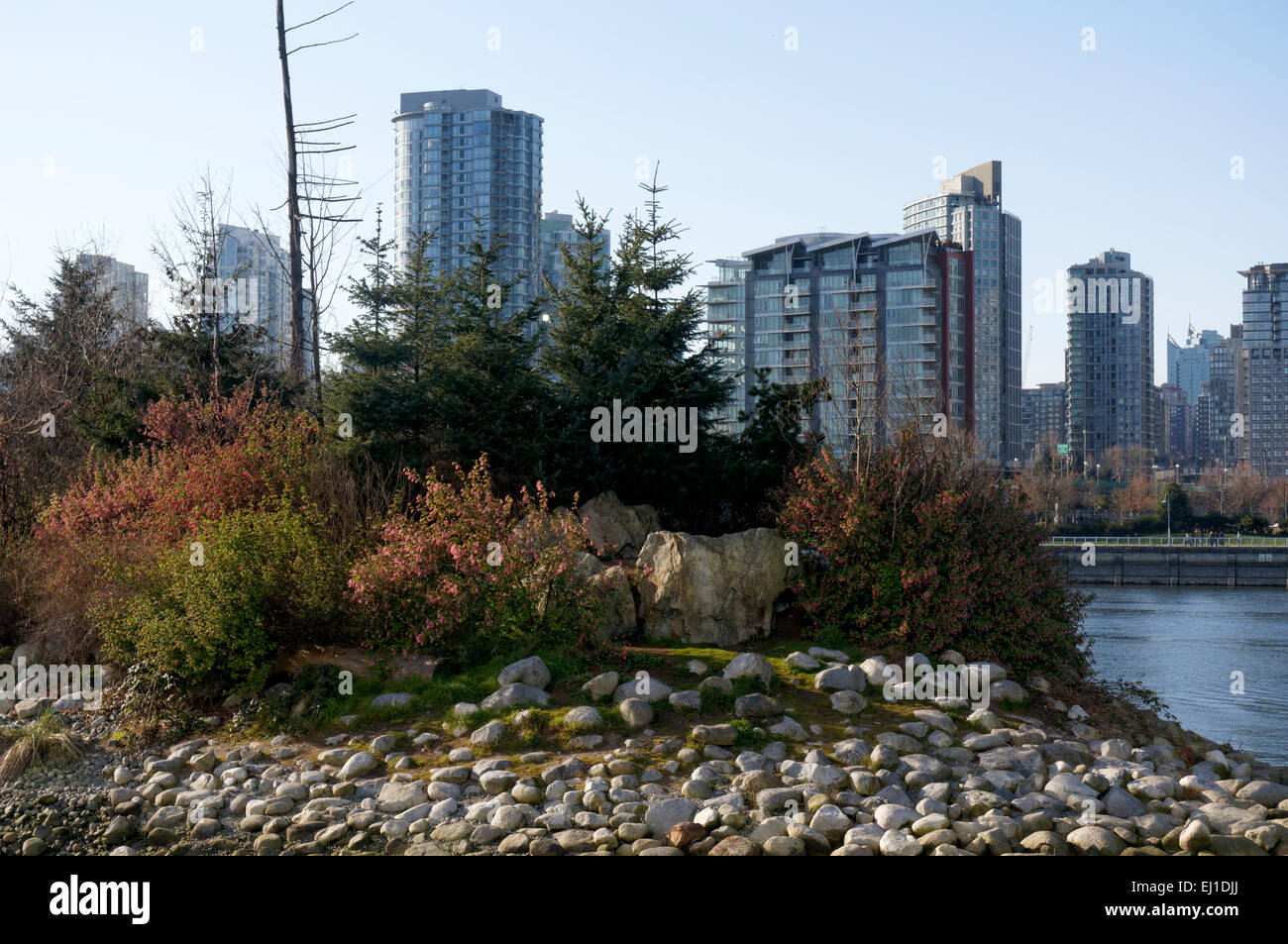 Sanctuaire de la nature de l'île de l'habitat dans la zone sud-est de False Creek, Vancouver, BC, Canada Banque D'Images