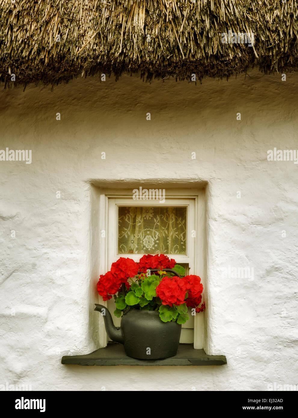 Begonia fleur en pot et fenêtre et toit de chaume. Le château de Bunratty, Irlande Photo Stock
