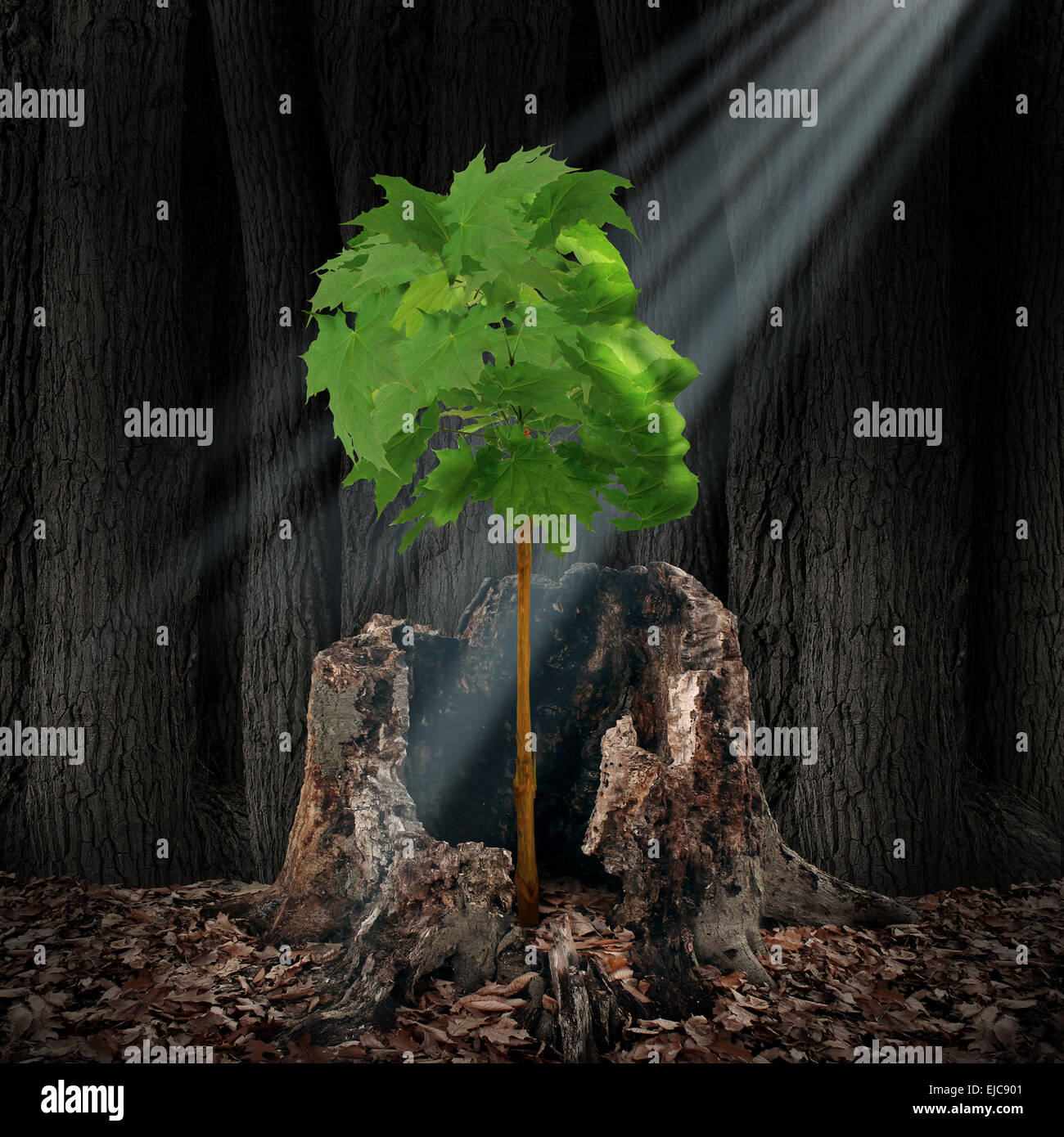 Renouvellement de la vie et de récupération concept comme une feuille verte en forme d'arbre comme une tête humaine, fruit d'une vieille souche morte comme symbole de survie pour la renaissance et de la création d'un nouveau vous après un problème de toxicomanie ou de crise. Banque D'Images