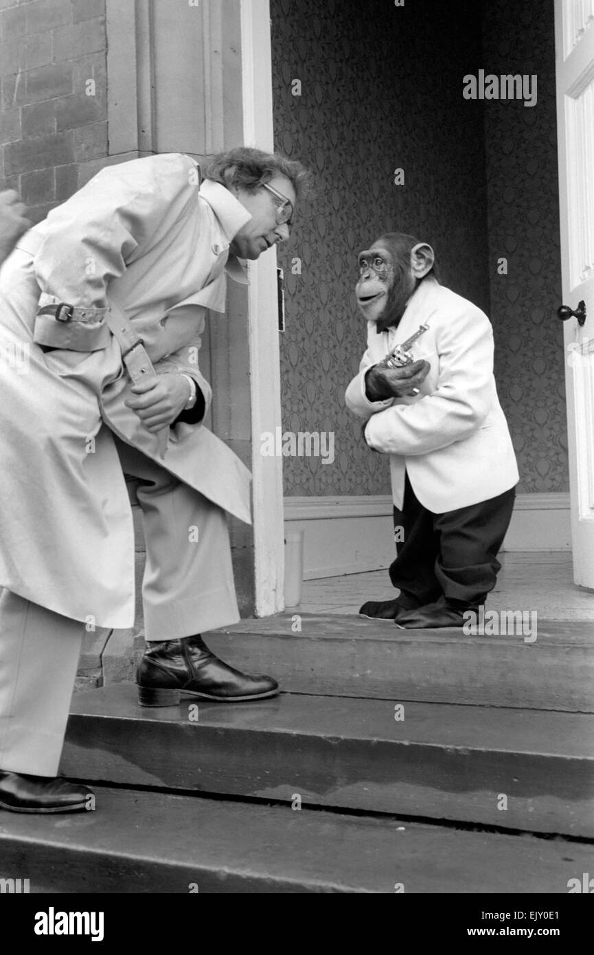 Animaux: singes: Bill Marshall a un plateau avec les chimpanzés à Brook Bond Le zoo de Twycross, Photo Stock