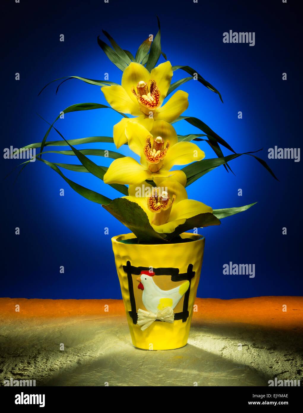 Une orchidée Pâques - Studio - still life droit photographié en utilisant les techniques de la peinture de lumière. Banque D'Images