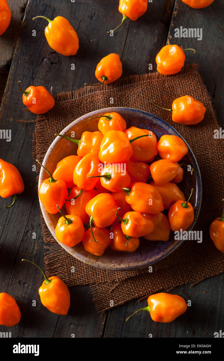 Le Habanero Orange biologiques crus poivrons sur un arrière-plan Photo Stock