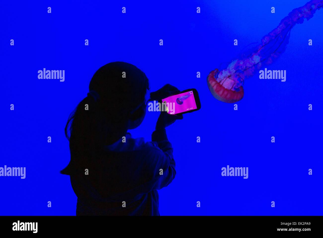 Ripley's Aquarium of Canada, Toronto, Ontario, jeune fille en photographiant les méduses Photo Stock