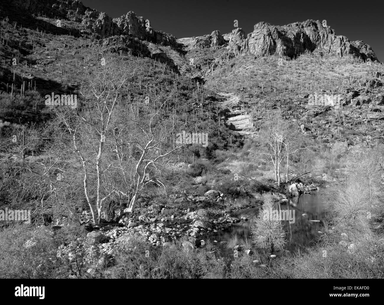 Sabino Canyon, Arizona Photo Stock