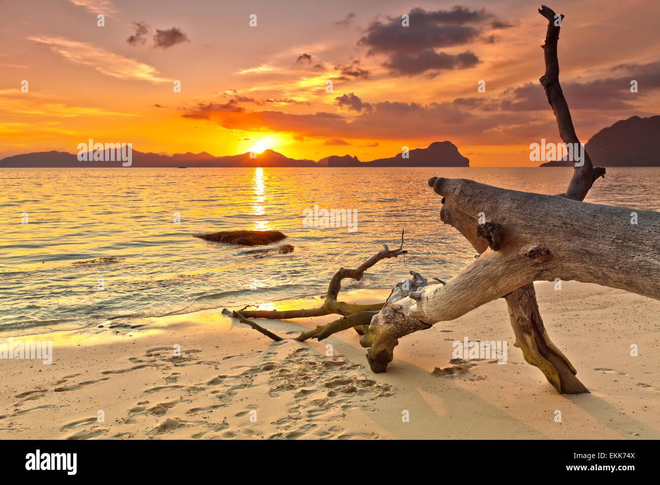 Coucher de soleil sur l'île. Arbre Sec sur l'avant-plan Photo Stock