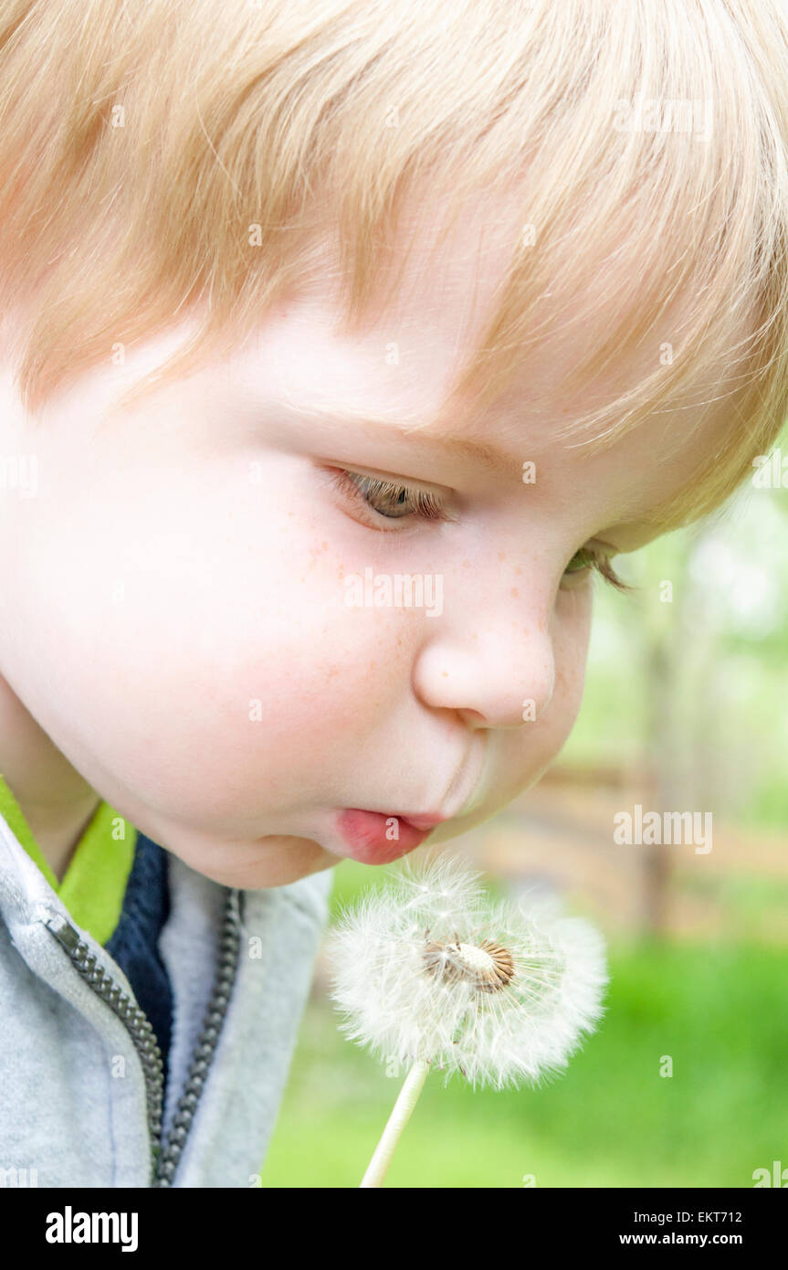 Enfant en soufflant sur le pissenlit Photo Stock