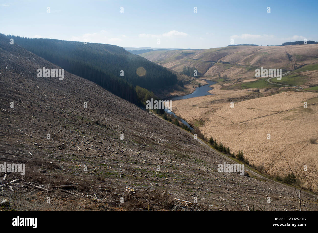 La déforestation dans la campagne près de Gallois Llyn Brianne Ceredigion Mid Wales UK Photo Stock