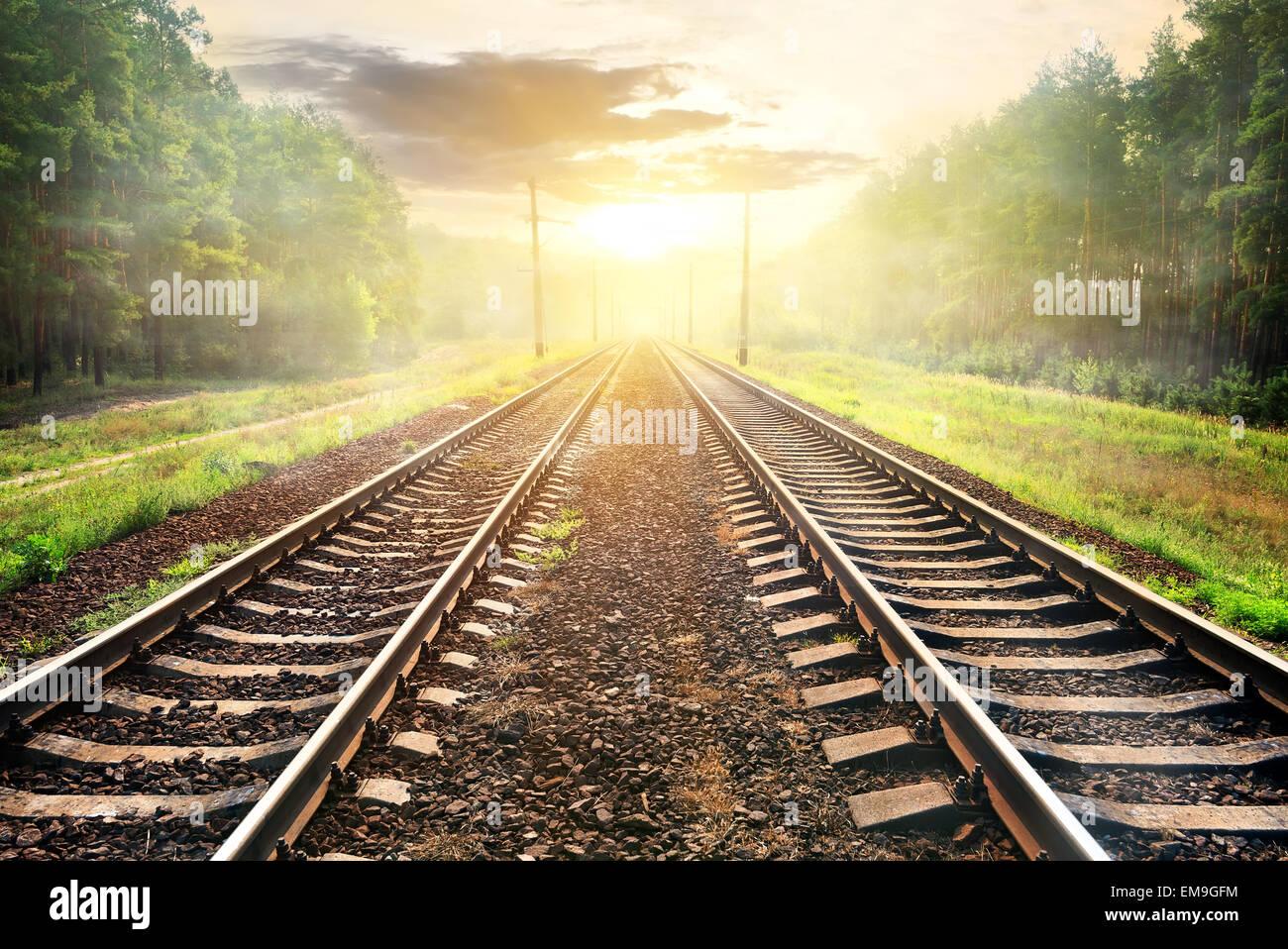 Brouillard sur chemin de fer en forêt au lever du soleil Photo Stock