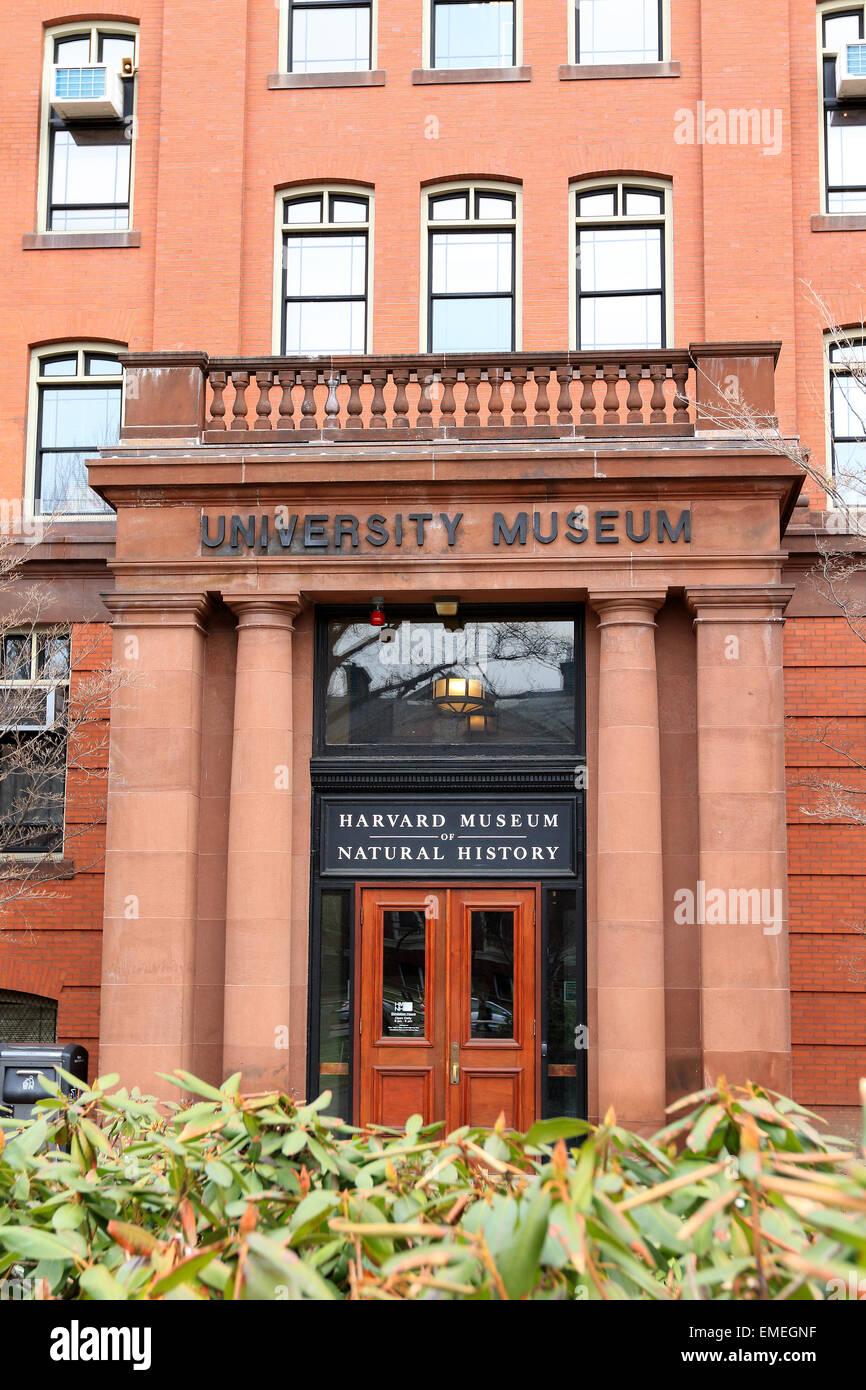 Le Musée d'histoire naturelle de Harvard campus de l'Université Harvard à Cambridge, Massachusetts. Photo Stock