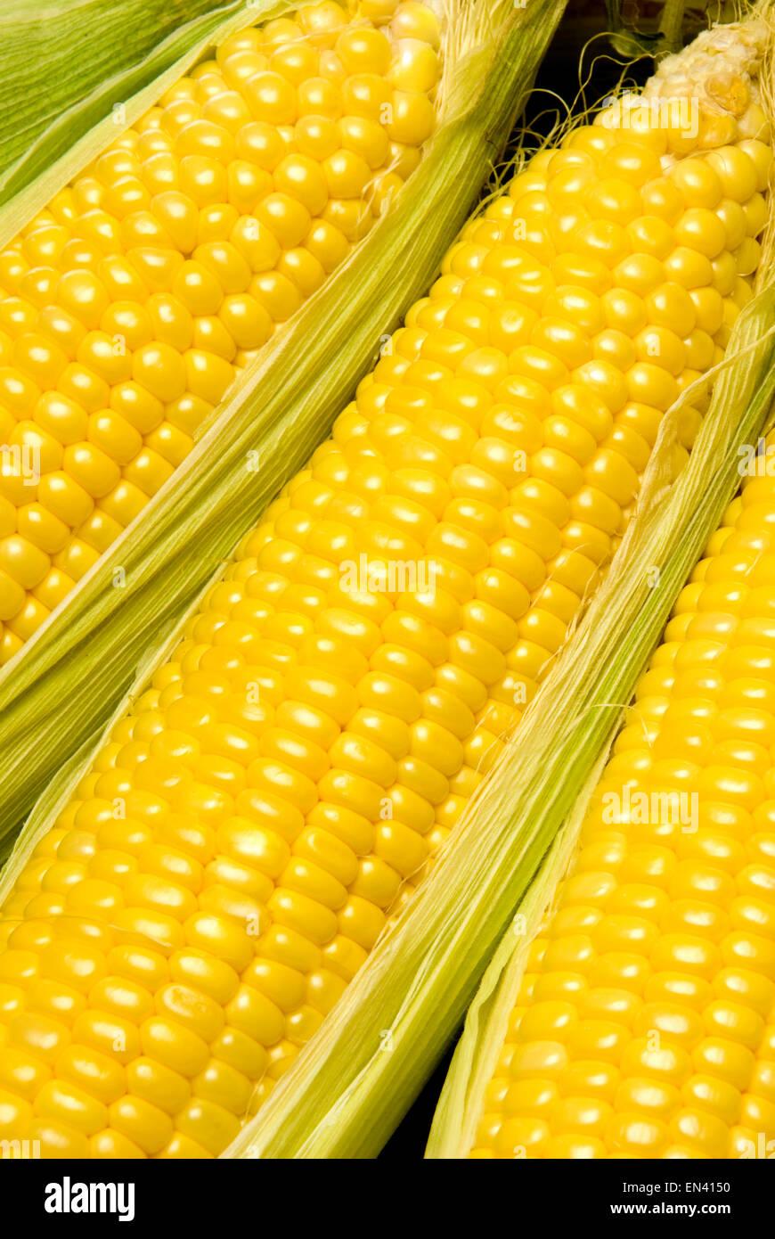 Les épis de maïs A Photo Stock