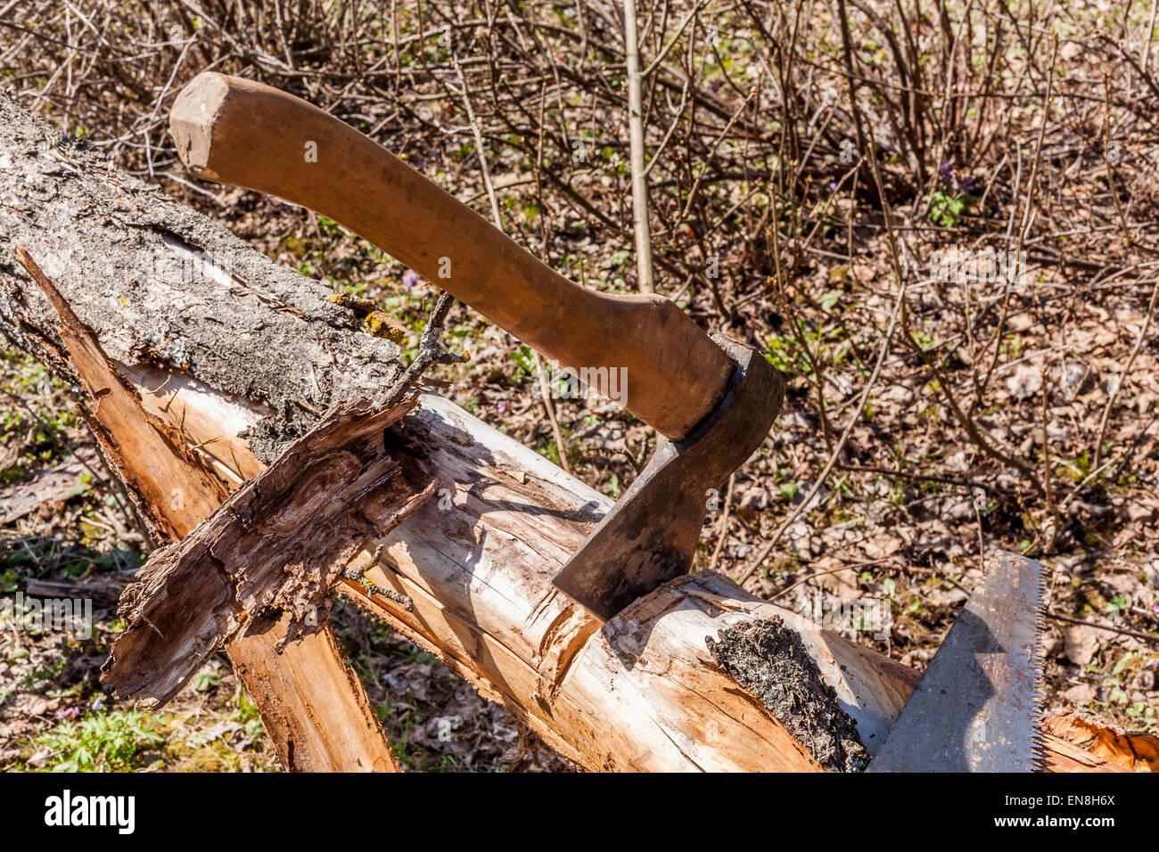 La cabine de l'ancien arbre desséché dans un jardin au moyen d'une hache et une scie Photo Stock