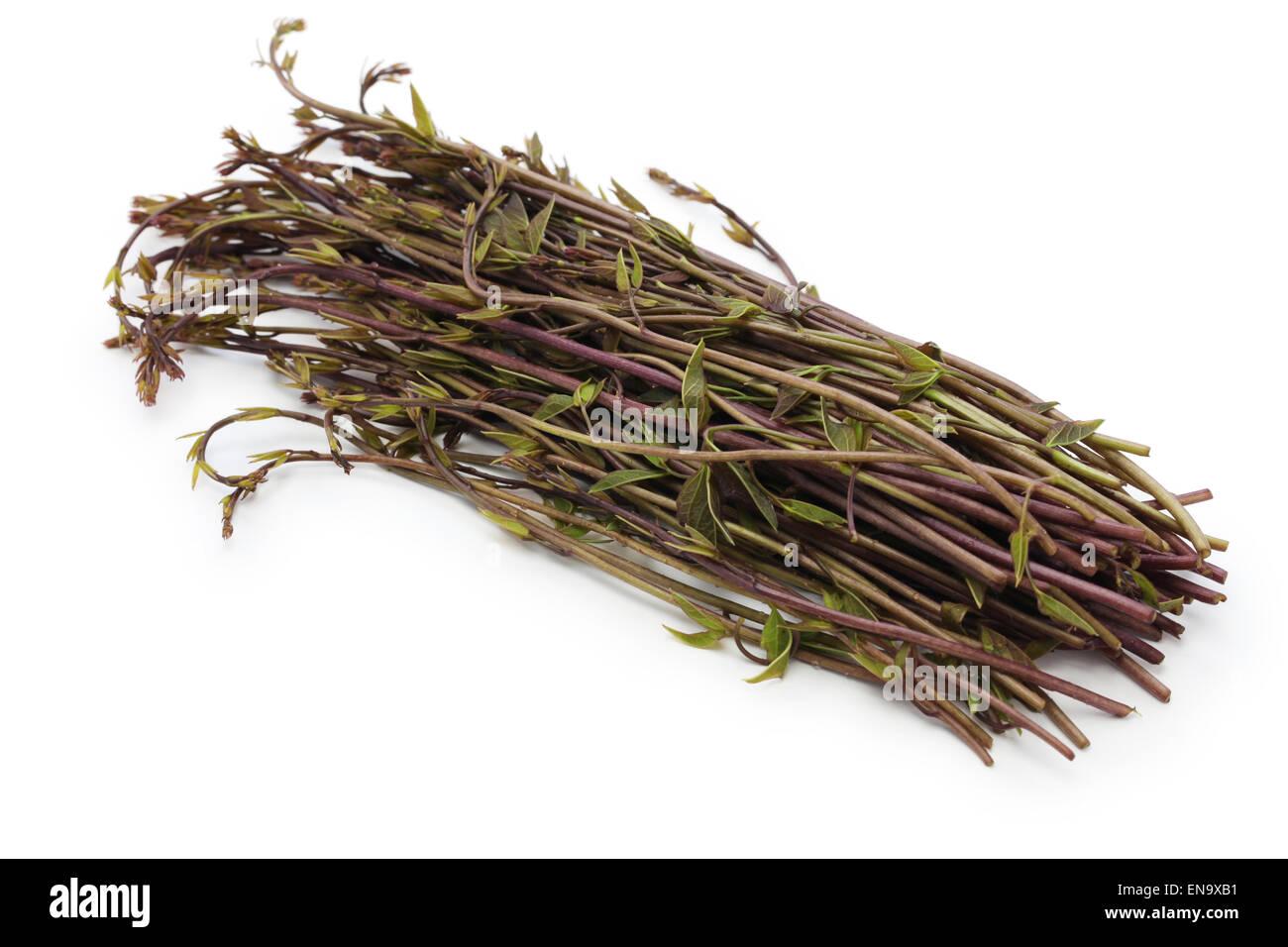 Akebia quinata, substance brute, de légumes de montagne japonais Photo Stock