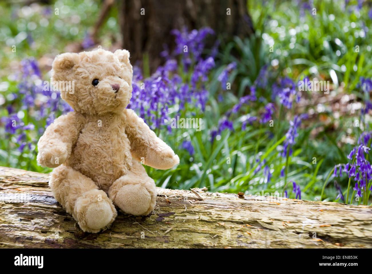 Ours assis sur une branche dans un bois entouré de jacinthes Photo Stock