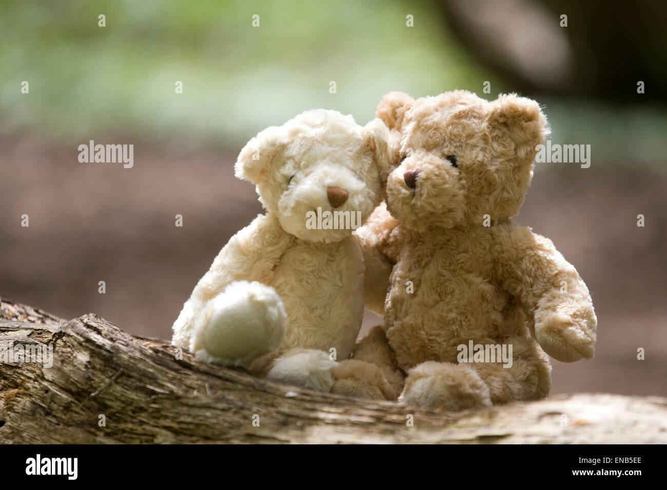 Ours assis sur une branche dans un bois Photo Stock