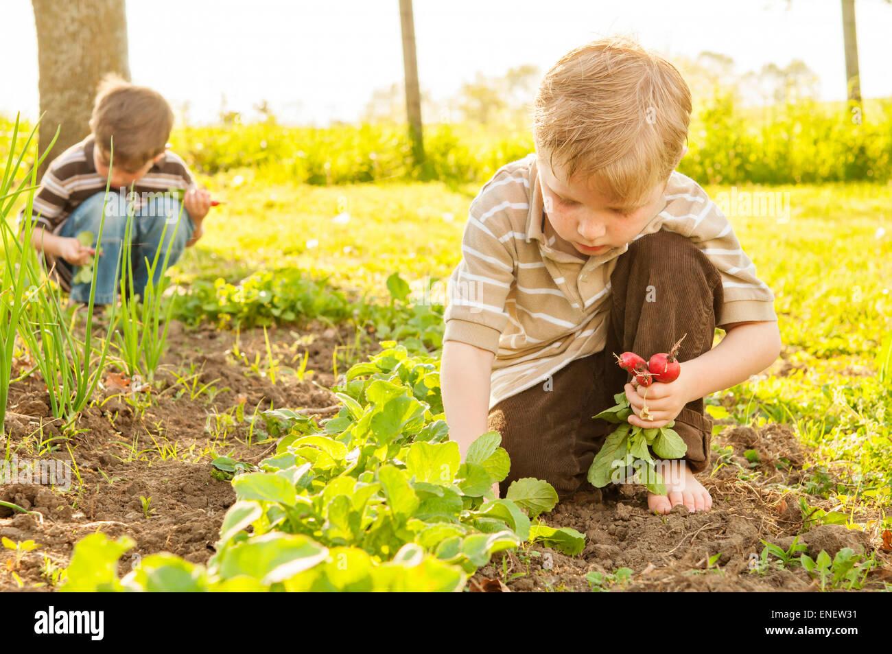 Deux garçons qui travaillent dans le jardin de printemps Photo Stock