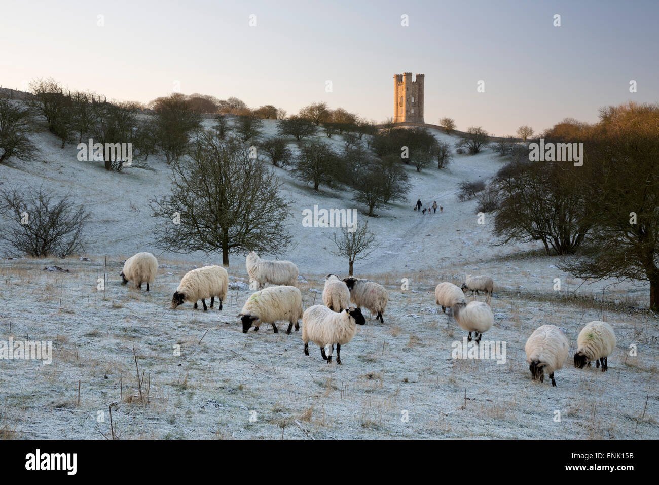 Broadway Tower et moutons en matin givre, Broadway, Cotswolds, Worcestershire, Angleterre, Royaume-Uni, Europe Photo Stock