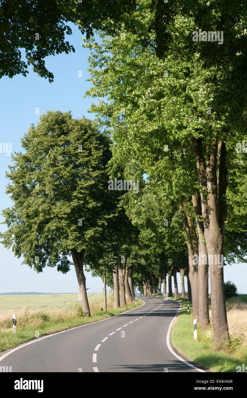 Country Road, alley, paysage Weserbergland, Basse-Saxe, Allemagne Banque D'Images
